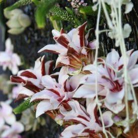 אורית הרץ - שזירת עיצוב פרחים בפורמה מיוחדת