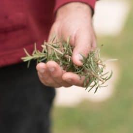 צמחי חורף לשתילה בגינה